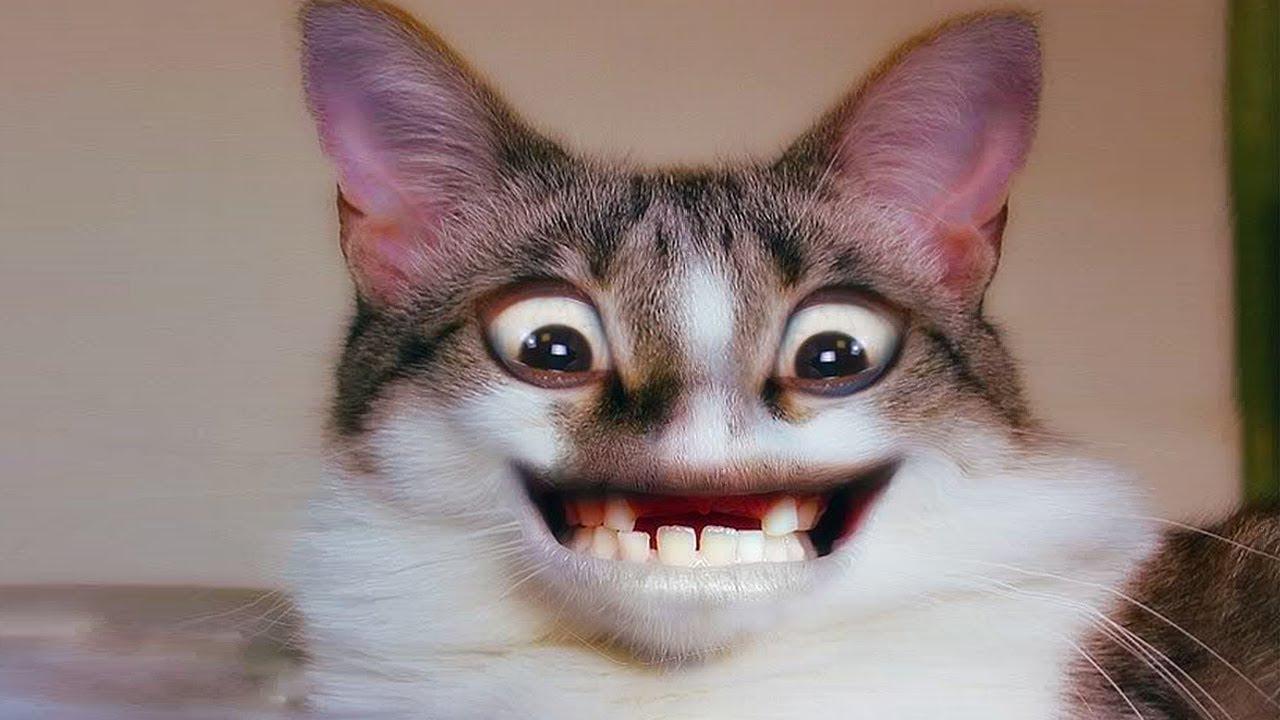 Коты ржачные животные
