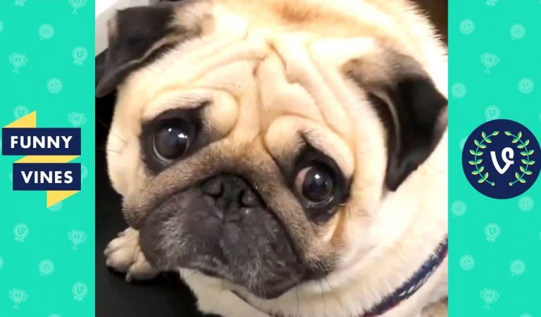 TRY NOT TO LAUGH — Funny Animals that will cure your sadness!