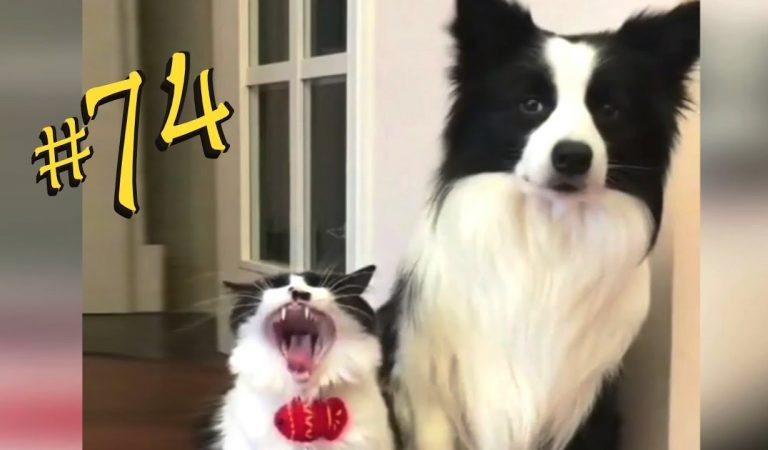 ПРИКОЛЫ С ЖИВОТНЫМИ 😺🐶 Смешные Животные Собаки Смешные Коты Приколы с котами Забавные Животные #74
